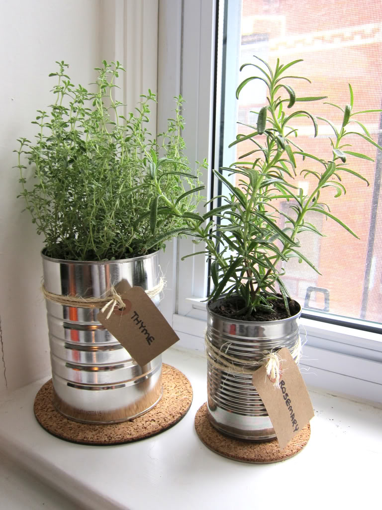 Plants in The Pots Decor Ideas - Kitchen Decor Ideas
